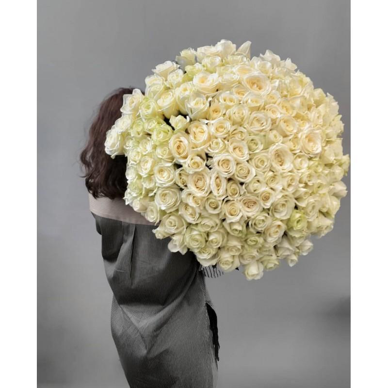 151 белая роза Аваланж
