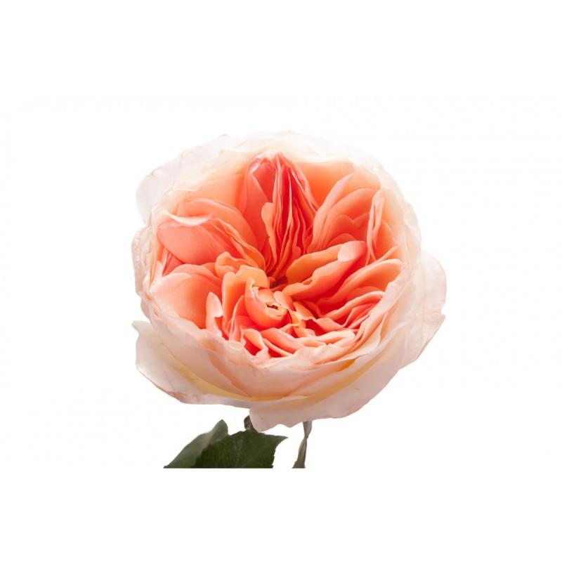 Розы Джульет поштучно от 11 штук