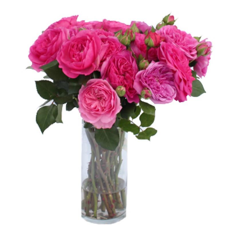 Розы Баронесса поштучно от 11 штук