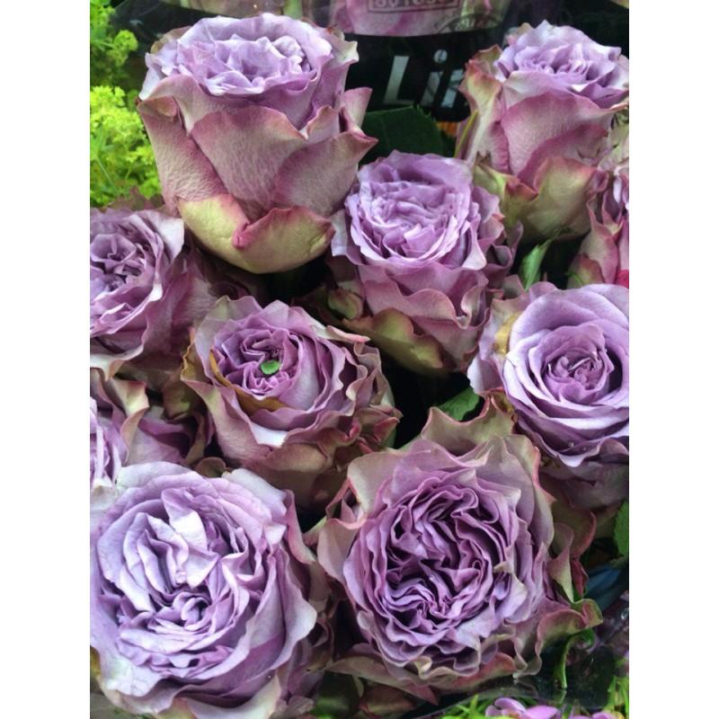 Розы Консуелла