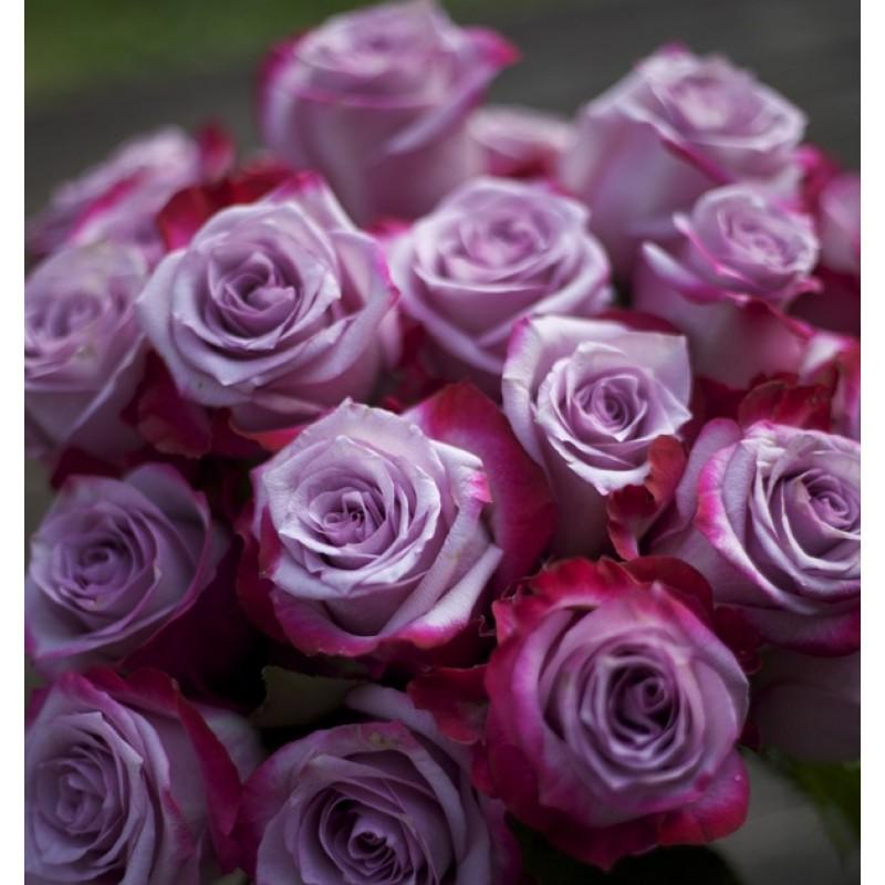 Розы Deep Purple поштучно от 25 штук