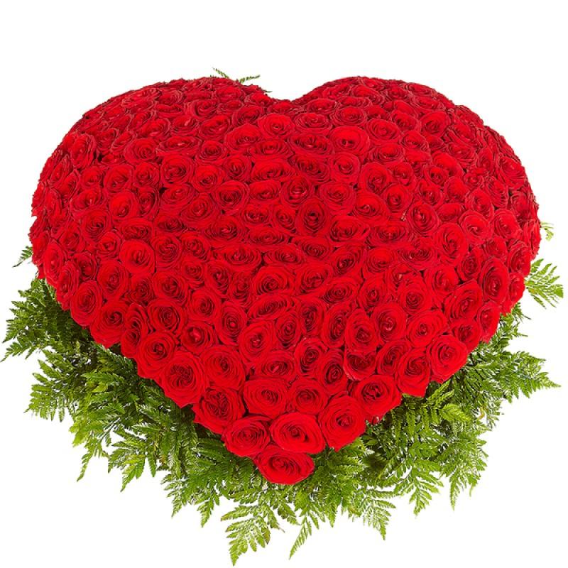 Сердце из 201 розы