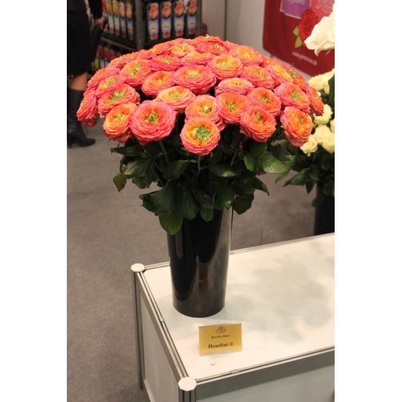 51 роза сорта Гудини в вазе