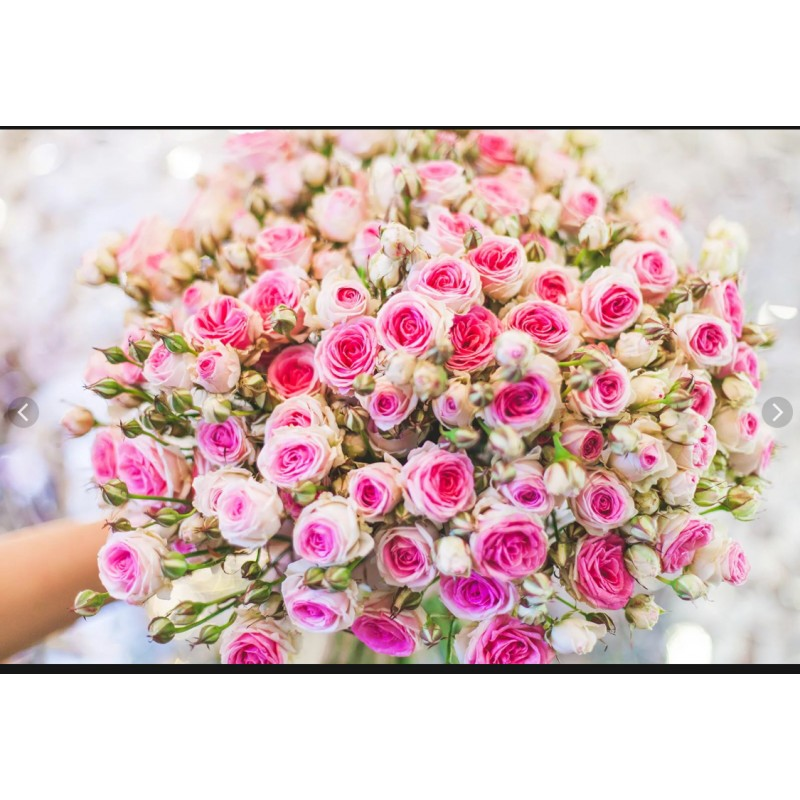 Розы Мими Эден