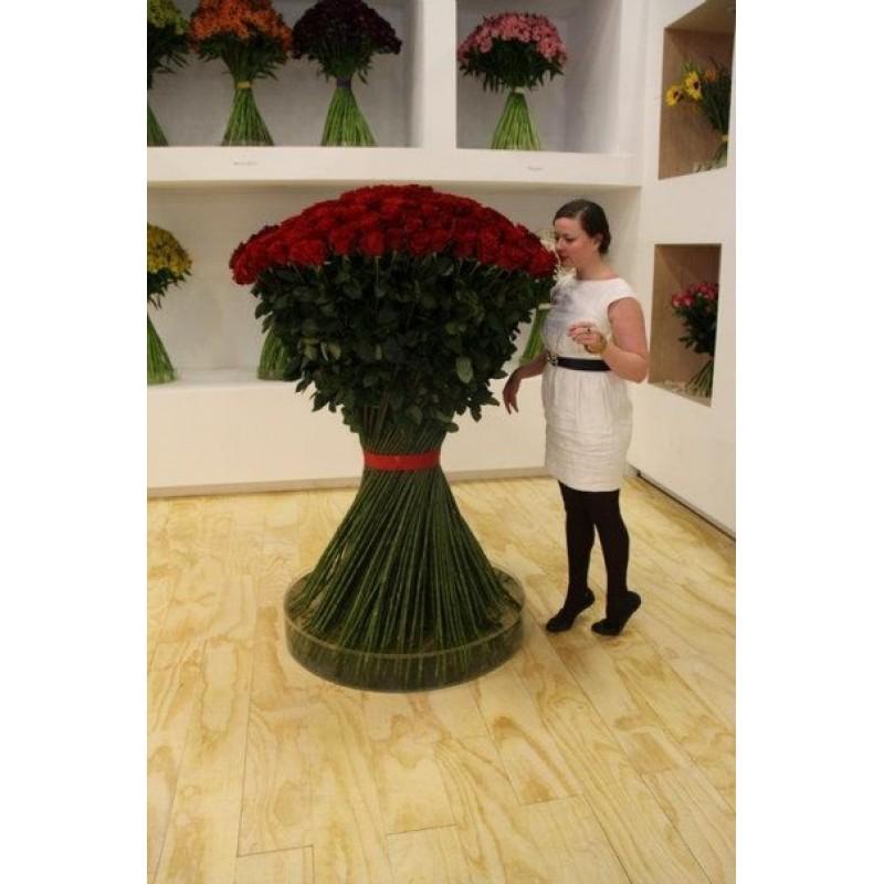 101 роза 150 см.