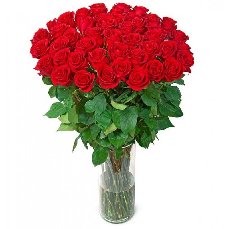 51 роза высотой 120 см, Эквадор
