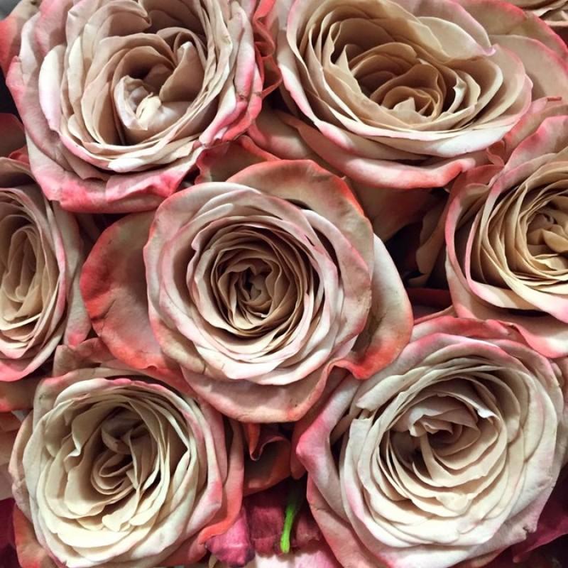Розы Каппучино поштучно от 9 штук