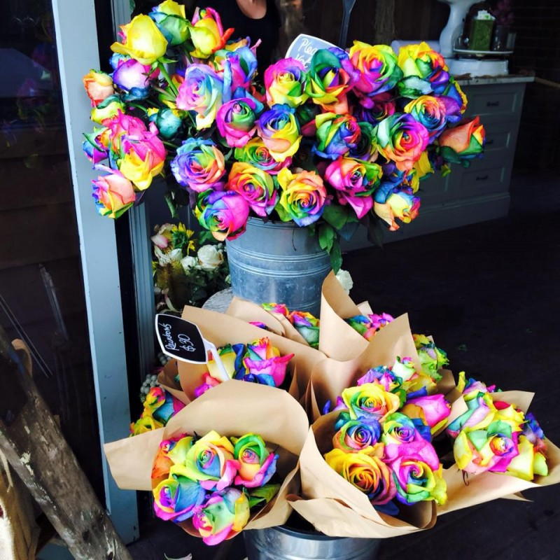 Радужные розы (Голландия) поштучно от 15 штук