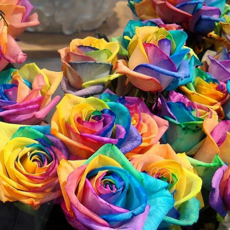 Радужные розы (Эквадор) от 25 штук
