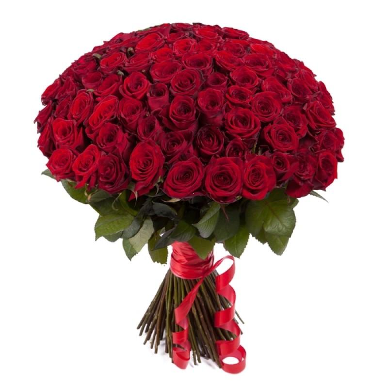 101 красная розы высотой 50 см.