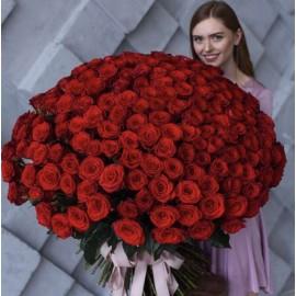 201 красная роза Эквадор