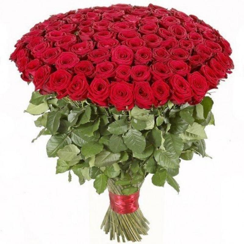 101 красная роза высотой 80 см.