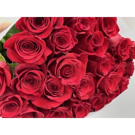 Розы Эксплорер 60 см.