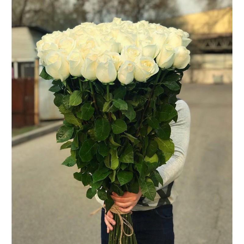 51 роза Венделла Эквадор
